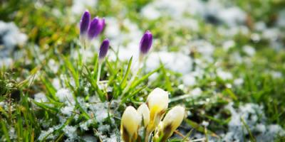 Lawn Care Service Provides 3 Winter-Specific Tips to Care for Your Grass, Brookfield, Connecticut