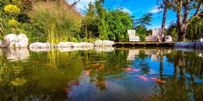 5 Goldfish Varieties Perfect for Your Water Garden, Columbia, Missouri