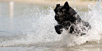 Veterinarians Guide to 3 Water Parasites & Their Impact on Dogs, Baraboo, Wisconsin