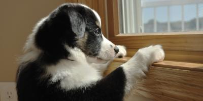 Veterinarians Share Advice on Helping Dogs With Separation Anxiety, Baraboo, Wisconsin