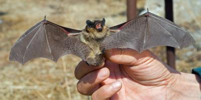 4 Bat Removal Do's & Don'ts, New Milford, Connecticut