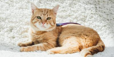 5 Excellent Reasons to Spay or Neuter Your Pet, Batavia, Ohio