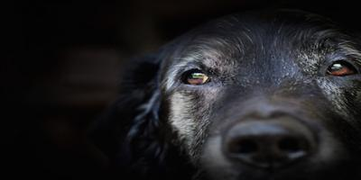 Knowing When it's Time for Pet Euthanasia, San Jose, California