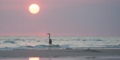5 Reasons to Book a Beach Rental Along Florida's Forgotten Coast, Atlanta, Georgia