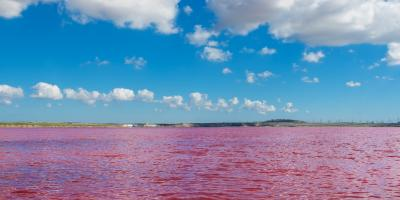 "What Is the 'Red Tide"" & Has It Impacted Gulf Shores, AL?, Orange Beach, Alabama"