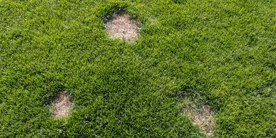 Why Are There Dry Patches On Your Lawn?, Beavercreek, Ohio