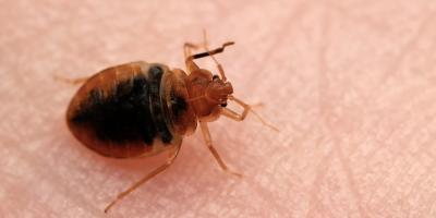 Top 3 Signs You Need Bed Bug Treatment for Your Home, Dayton, Ohio