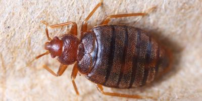 3 Helpful Reasons for Leaving Bedbug Removal to the Pros, Lexington-Fayette, Kentucky