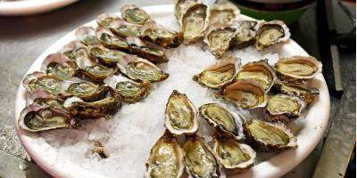 5 Types of Beer That Pair Well With Oysters, St. Petersburg, Florida