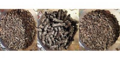 Feeding Beet Pulp to Horses, Conyers, Georgia