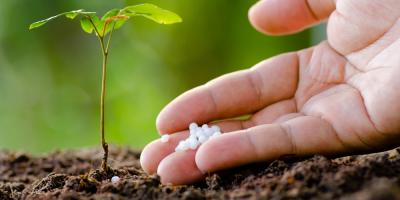 How Blood & Bone Meal Benefit Your Plants, Bellville, Texas