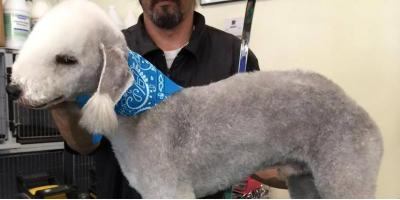 Bonnie's Shares Dog Grooming Tips to Get Your Pet Ready For Summer!, Washington, District Of Columbia