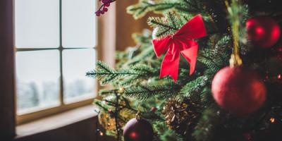 Bethalto Exterminators Share 3 Tips for Dealing With Holiday Tree Pests, Bethalto, Illinois