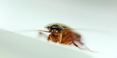 Common Spring Pests That Your Exterminator Can Treat, Bethalto, Illinois