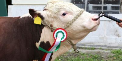 5 Helpful Tips to Prepare for Your First Livestock Show, Bethel, Ohio