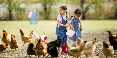 How to Take Care of Chickens, Bethel, Ohio