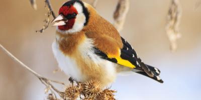 A Guide to Feeding Wild Birds This Winter, Bethel, Ohio
