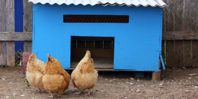 How Big Should Your Chicken Coop Be?, Bethel, Ohio
