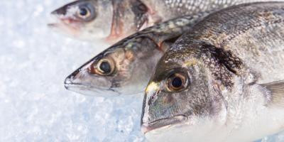 How to Store Fresh Seafood , Bon Secour, Alabama