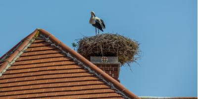 How to Tell if There Are Birds in Your Chimney & What to Do, Kernersville, North Carolina