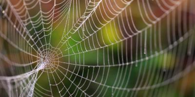 Prevent Spiders With These Winter Pest Control Tips, Trussville, Alabama