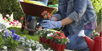 4 Georgia Plants & Flowers for Your Landscape Design, Blairsville, Georgia
