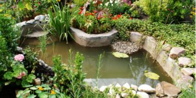 3 Effective Aquatic Weed Control Solutions for Your Water Garden, East Bloomfield, New York
