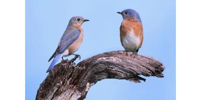 BLUEBIRD CONFERENCE & BIRDING FESTIVAL, Lincoln, Nebraska