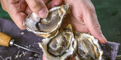 How to Shuck Oysters, Bon Secour, Alabama
