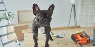 4 FAQ About Pets & Asbestos, ,