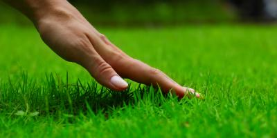 Lawn Fertilization & Insecticides for Grubs: What You Need to Know, Brookfield, Connecticut