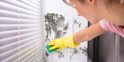 5 Signs Your Apartment Has a Mold Issue, Brooklyn, New York