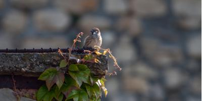 How to Remove Birds From Your Chimney, Dayton, Ohio