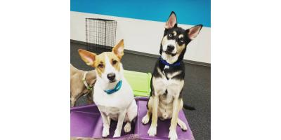 What Dogs Do Best in Dog Day Care?, Highland Village, Texas