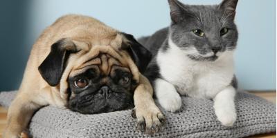 4 Common Ear Problems in Pets, Buckeye Lake, Ohio