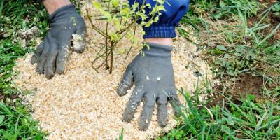 Why Professionals Should Mulch Your Garden in Spring, Burlington, Kentucky