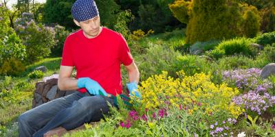 3 Plants to Incorporate in a Rock Garden, Bullhead City, Arizona