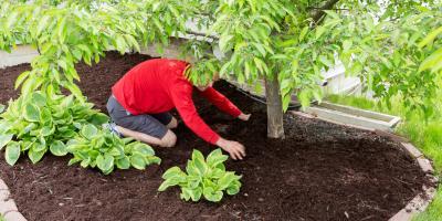 The Do's & Don'ts of Mulching Around Trees, Burlington, Kentucky