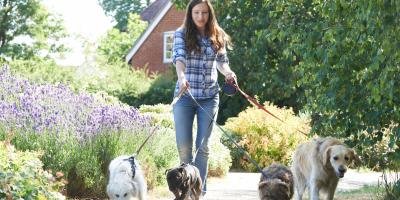 3 Essential Types of Insurance for Pet-Based Businesses, Lexington-Fayette Central, Kentucky