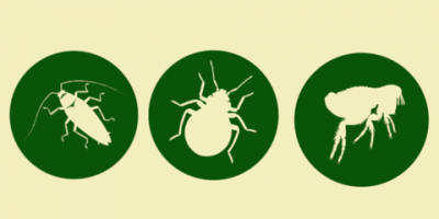 Pest control trivia  roaches, Mobile, Alabama