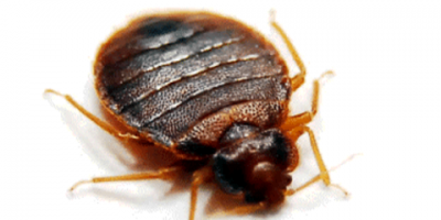 Eco-Therm Shares Signs & Symptoms of a Bed Bug Infestation, Newberry, Ohio