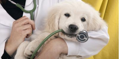 5 Pet Vaccinations Your Dog Needs Before Boarding, Warren, Ohio