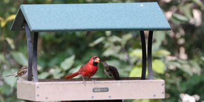 NutraSaff Safflower - Birds love it! Squirrels Don't, Lincoln, Nebraska