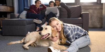 3 Ways to Protect Your Carpet From Pet Stains, Brownstown, Pennsylvania