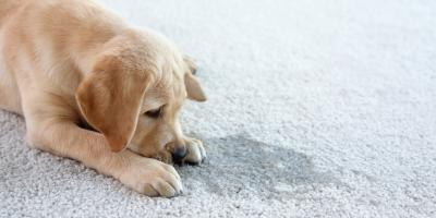 3 Useful Carpet Cleaning Tips for Pet Owners, Lexington-Fayette Central, Kentucky