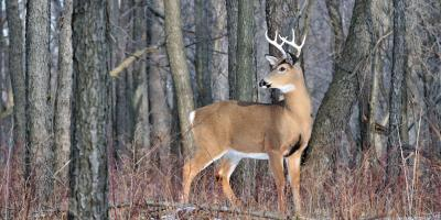 Going Hunting? Know the Difference Between EHD & CWD, Carrollton, Kentucky
