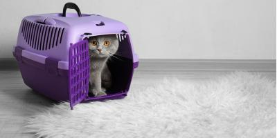 Cat Boarding Do's & Don'ts, Kabletown, West Virginia