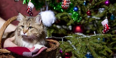 How to Cat Proof Your Christmas Tree, Newport-Fort Thomas, Kentucky