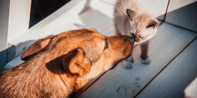 How Pet Grooming Benefits Animals Beyond Appearances, Avon, Ohio