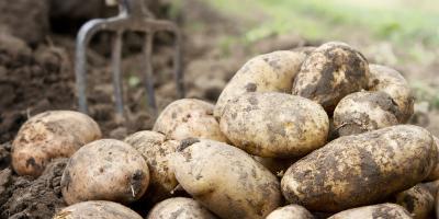 4 Delicious Ways to Prepare Potatoes, Newtown, Ohio